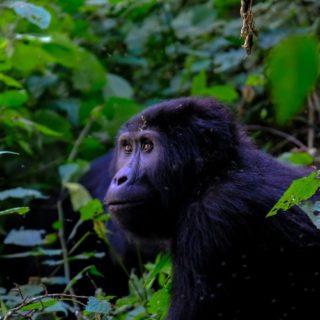 10 Days Uganda Wildlife tour and gorilla trekking safari - Kabira Uganda Safaris