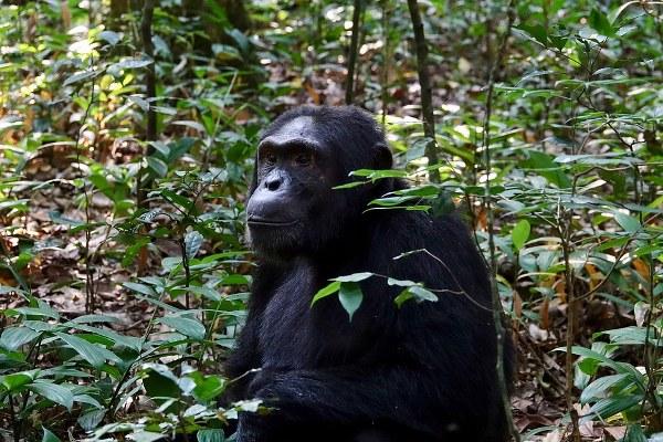 12 Days Uganda gorilla trekking safari, Wildlife tour - Kabira Uganda Safaris