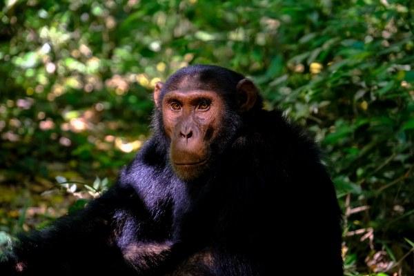 12 Days Uganda gorilla trekking safari, Wildlife tour & rafting trip - Kabira Uganda Safaris