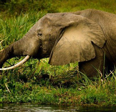 2 Days Murchison Falls safari Uganda - Kabira Uganda Safaris