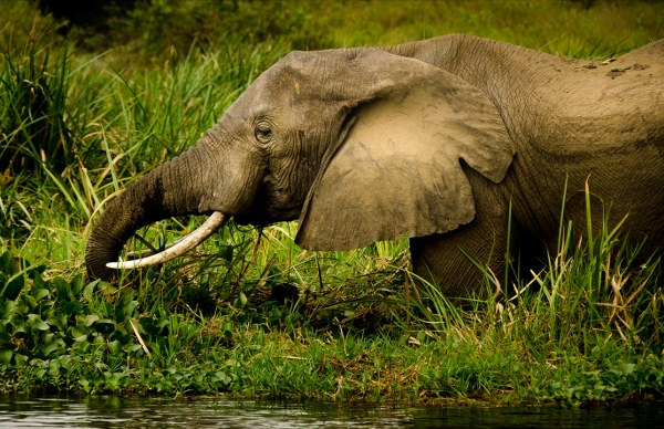 2 Days Murchison Falls safari Uganda - Kabira Uganda Safaris