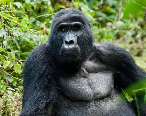 3 Days Bwindi gorilla trekking safari Uganda - Kabira safaris and tours