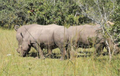 3 Days Murchison Falls safari in Uganda - Kabira Uganda safaris