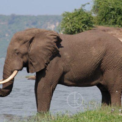 3 Days Murchison Falls safari in Uganda tours Kabira