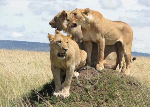 4 Days Kidepo Wildlife Safari Uganda - Kabira Uganda Safaris