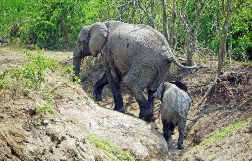 4 Days Queen Elizabeth NP Safari - Kabira Uganda Safaris
