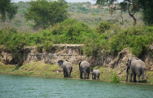 4 Days Queen Elizabeth National Park Safari - Kabira Uganda Safaris