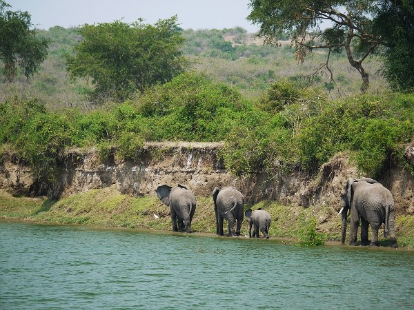 4 Days Queen Elizabeth National Park Safari - Kabira Uganda Safaris