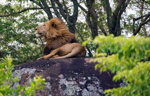 Kidepo National Park, 4 Days Uganda safari - Kabira Uganda Safaris