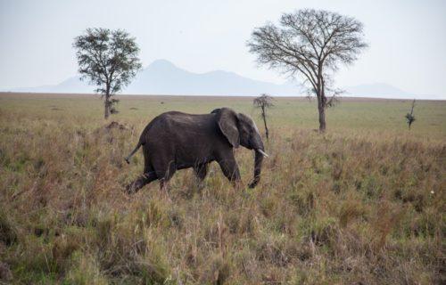 Kidepo Valley National Park, Uganda - Kabira Uganda Safaris