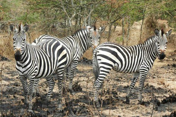 Lake Mburo National Park - Kabira Uganda Safaris