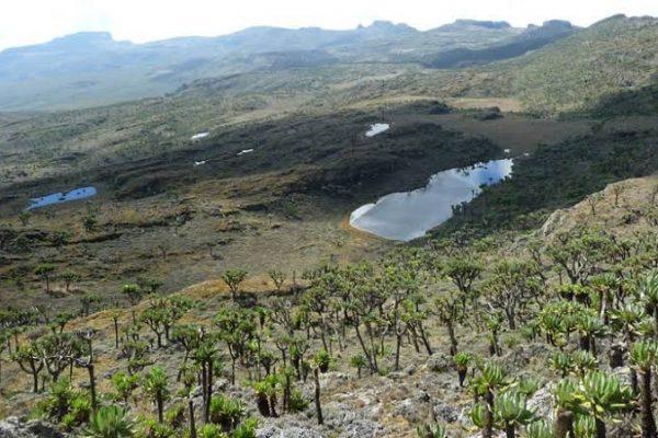 Mountain Elgon hiking - hiking safaris in Uganda
