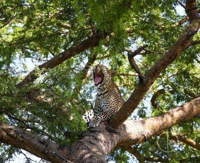 Wildlife safaris in uganda tour