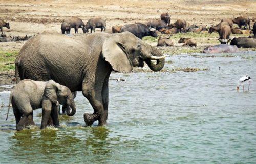 Kazinga channel, Queen Elizabeth National Park