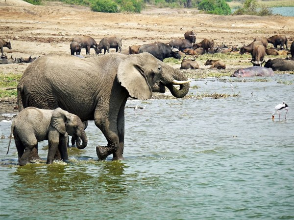 Kazinga channel, Queen Elizabeth National Park