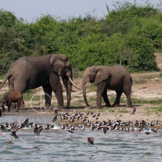 kazinga channel uganda safari tour - kabira