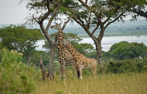 2 Days Murchison Falls safari