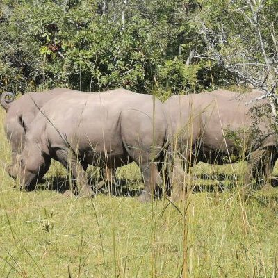 Zwia Rhino Tracking Visit