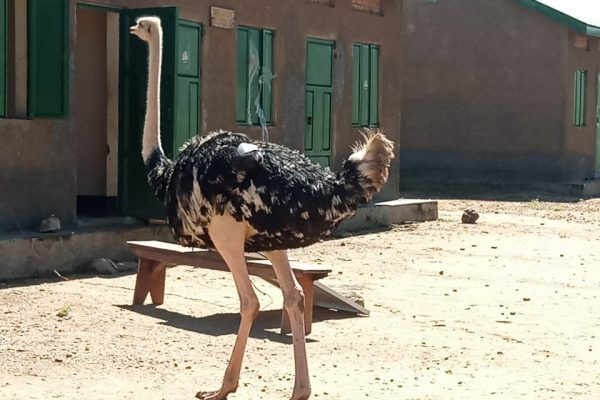 4 Days Kidepo Safari - Uganda Safaris