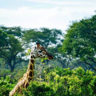 Wildlife in Murchison Falls National Park