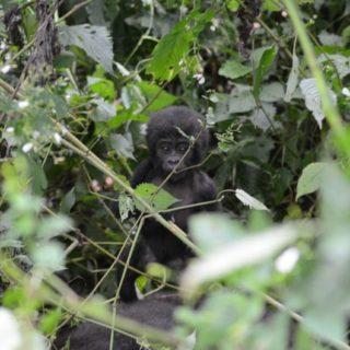 Uganda Safari Activities - Kabira safaris tours