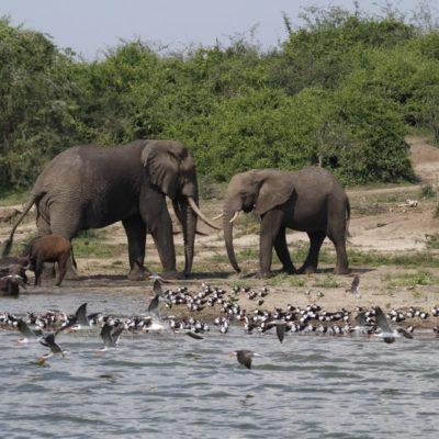 Uganda wildlife safaris
