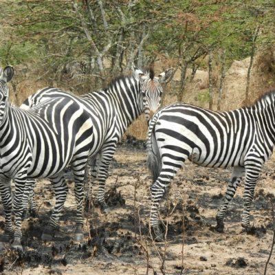 Lake Mburo National Park - Wildlife Viewing