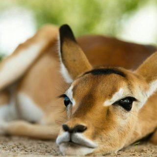 Wildlife in Murchison Park