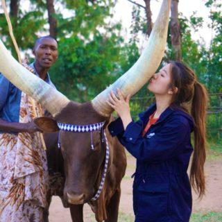 Long Horns Nyanaza district - Cultural tours in Rwanda
