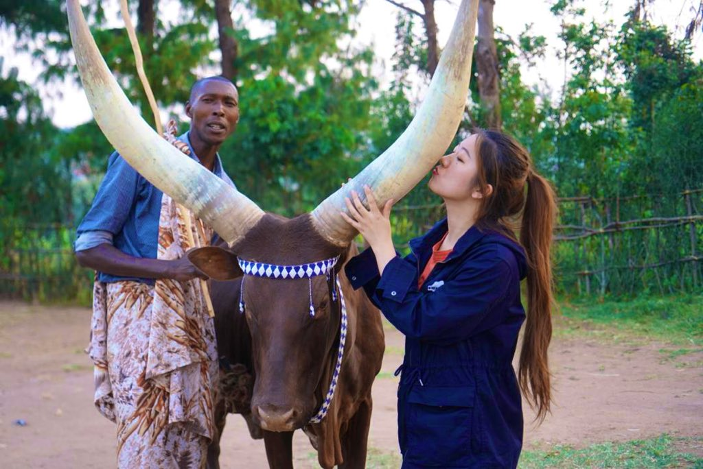 Long Horns Nyanaza district - Cultural tours in Rwanda