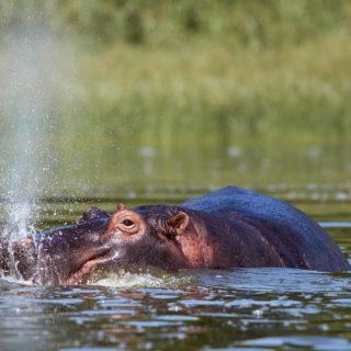 Wildlife viewing in Akagera National Park Rwanda