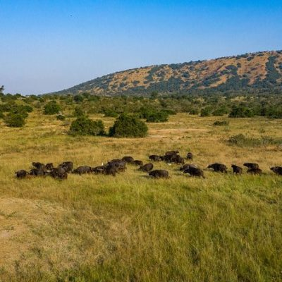 Wildlife tour in Akagera National Park Rwanda