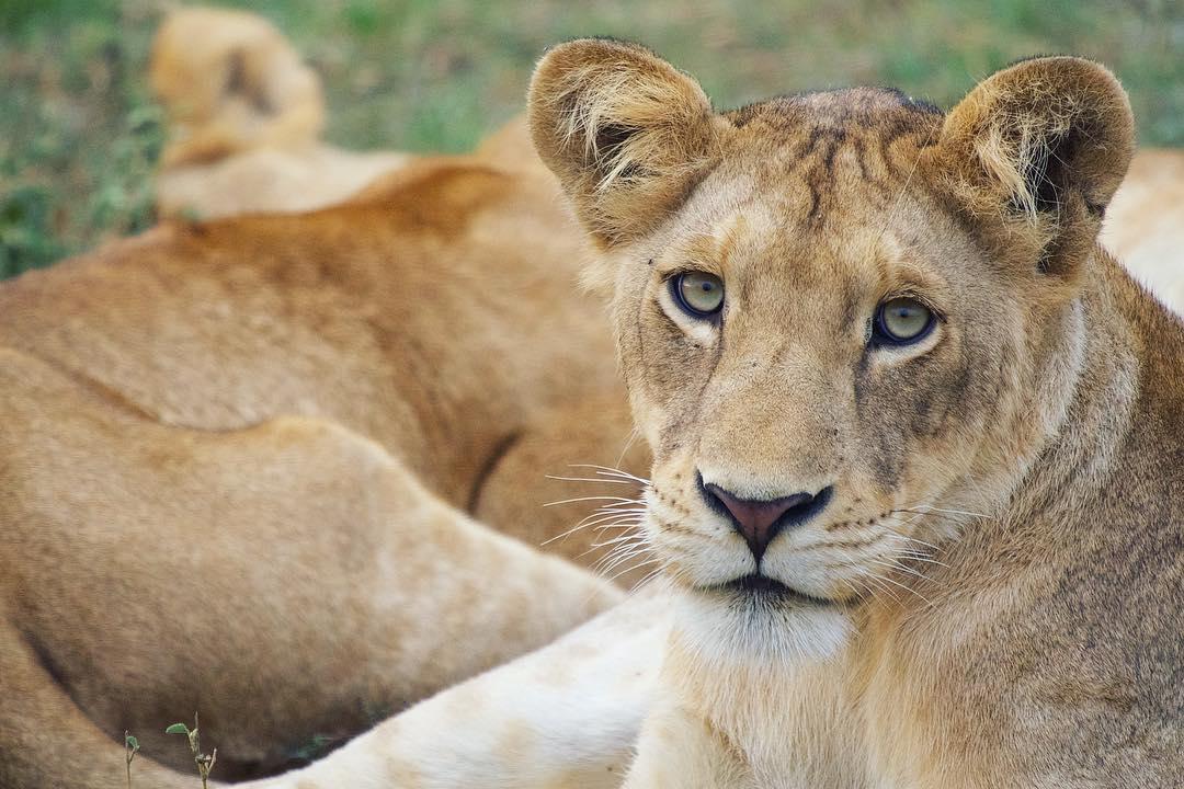 Best Uganda Wildlife tours Safaris