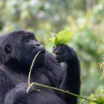 Bwindi Forest National Park Uganda - Gorilla Trekking tours