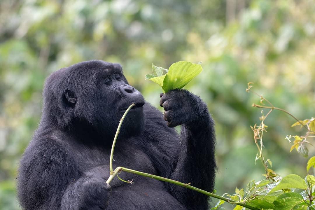 Uganda Safaris Tours (2020/21) Best Holidays Reviews - Kabira