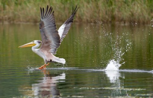 Long Uganda Birding Safaris Tour