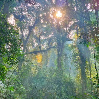Nyungwe national Park Rwanda