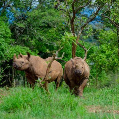 Rhino tracking in Akagera National Park Rwanda