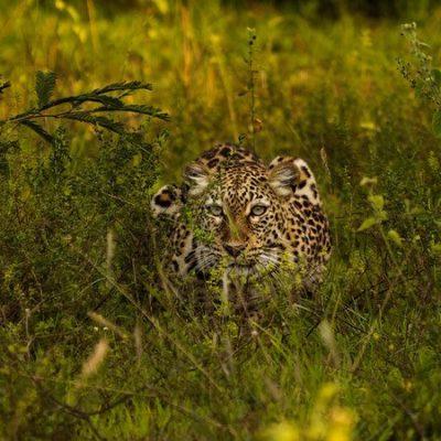 Wildlife in Akagera National Park Rwanda
