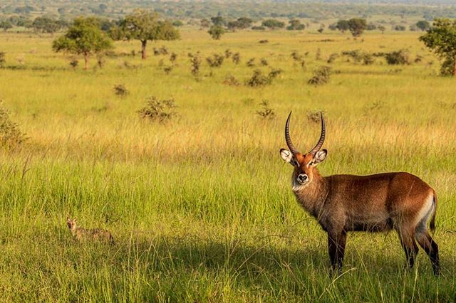 Wildlife Safaris - Game Drive Kidepo Valley National Park