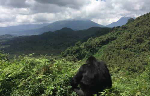 Budget Rwanda Safari