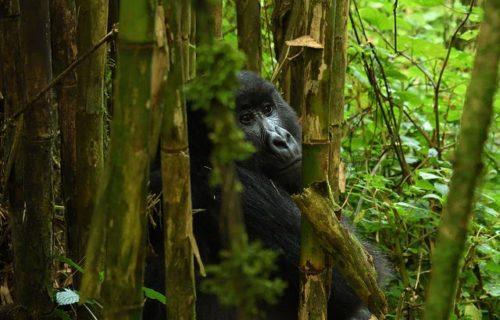 Luxury Rwanda Tours Safaris