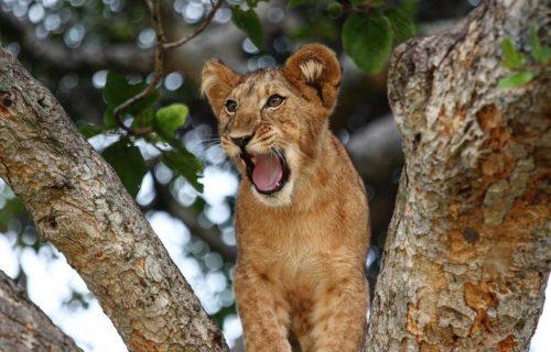 4 Days Queen Elizabeth National Park Wildlife Safari Uganda