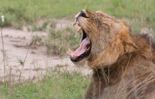 Safaris to Uganda - 8 Days