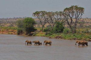 Kenya Safaris Tours