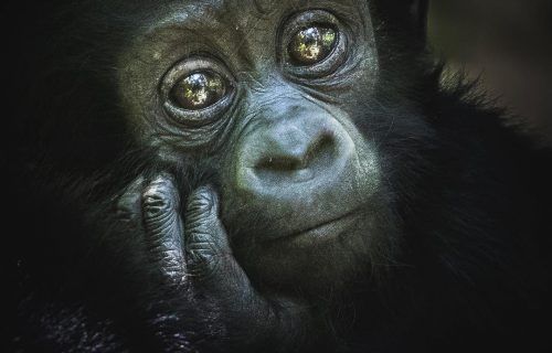 How Much Does it Cost to Go Gorilla Trekking in Uganda - Uganda Reopens Airport For Tourists