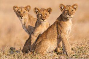 Katavi National Park - Affordable African Safari Vacations