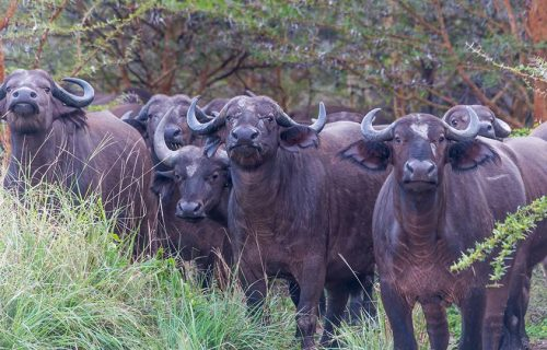 Wildlife in Kenya - Mikumi National Park