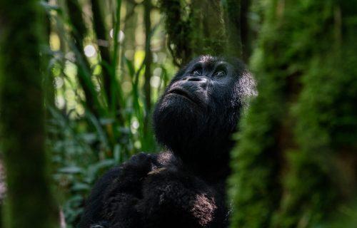 Rwanda, your luxury eco-tourism destination