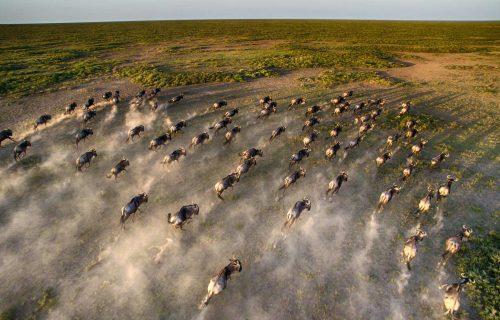 serengeti-under-canvas-wildebeest-migration-and-beyond